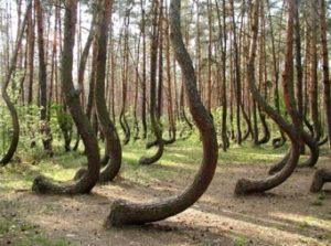 歪んでる木