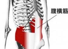 腹筋と僧帽筋の関連性