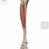 名古屋市北区 腰痛を足の筋肉で改善