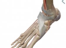 名古屋市中区 足の指の使いかたで、肩こり・痛みを診る