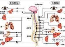 治癒力を高める自律神経のバランス